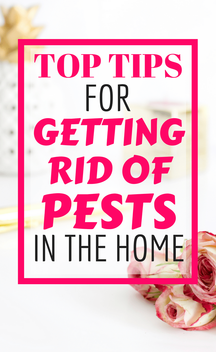 Top Tips for Battling and Preventing Pest Problems in Your Home #pestcontrol #pests #tips #howto #homemanagement #toptips #fleas #birds #cockroaches #killpests