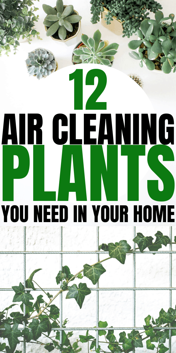 12 Air Cleaning Plants You Need In Your Home | Interior design | Air purifying plants | Indoor plants | Houseplants that clean the air | Via: https://themummyfront.com #themummyfront.com #houseplants #healthtips #healthyliving #plantcare