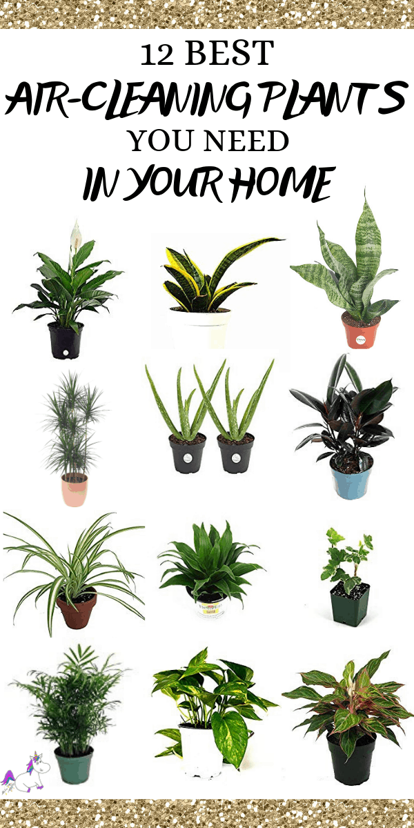 12 Best Air Cleaning Houseplants That Are Hard To Kill ( No Green Thumbs Needed) | Indoor plants | air purifying plants | Plants that clean air | Indoor plants that clean air | Home decor tips | Healthy home | Healthy Living Via https://themummyfront.com #aircleaninghouseplants #indoorplants #bestindoorplants #airpurifyingplants #homedecorinspiration