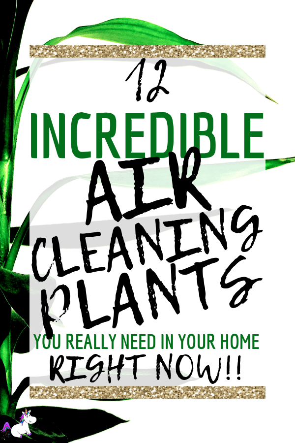 12 Air Cleaning Plants You Need In Your Home | Interior design | Air purifying plants | Indoor plants | Houseplants that clean air | low light houseplants | houseplants pets | non-toxic plants | Via: https://themummyfront.com #themummyfront.com #houseplants #healthtips #healthyliving #houseplantspets #houseplantsdecor