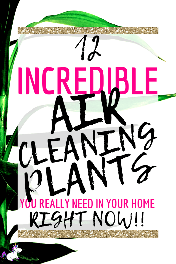 12 Air Cleaning Plants You Need In Your Home | Interior design | Air purifying plants | Indoor plants | Houseplants that clean air decor | houseplants decor | houseplants non toxic | housplants safe for cats | Via: https://themummyfront.com #themummyfront.com #houseplants #healthtips #healthyliving #houseplantssafeforcats #lowlighthouseplants
