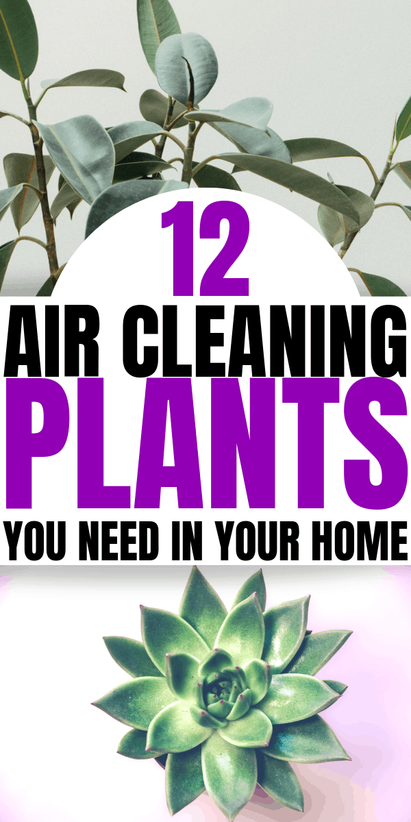 12 Air Cleaning Plants You Need In Your Home | Interior design | Air purifying plants | Indoor plants | Houseplants that clean the air |Home decor inspiration | healthy living | Via: https://themummyfront.com #themummyfront.com #houseplants #healthtips #healthyliving #plantcare