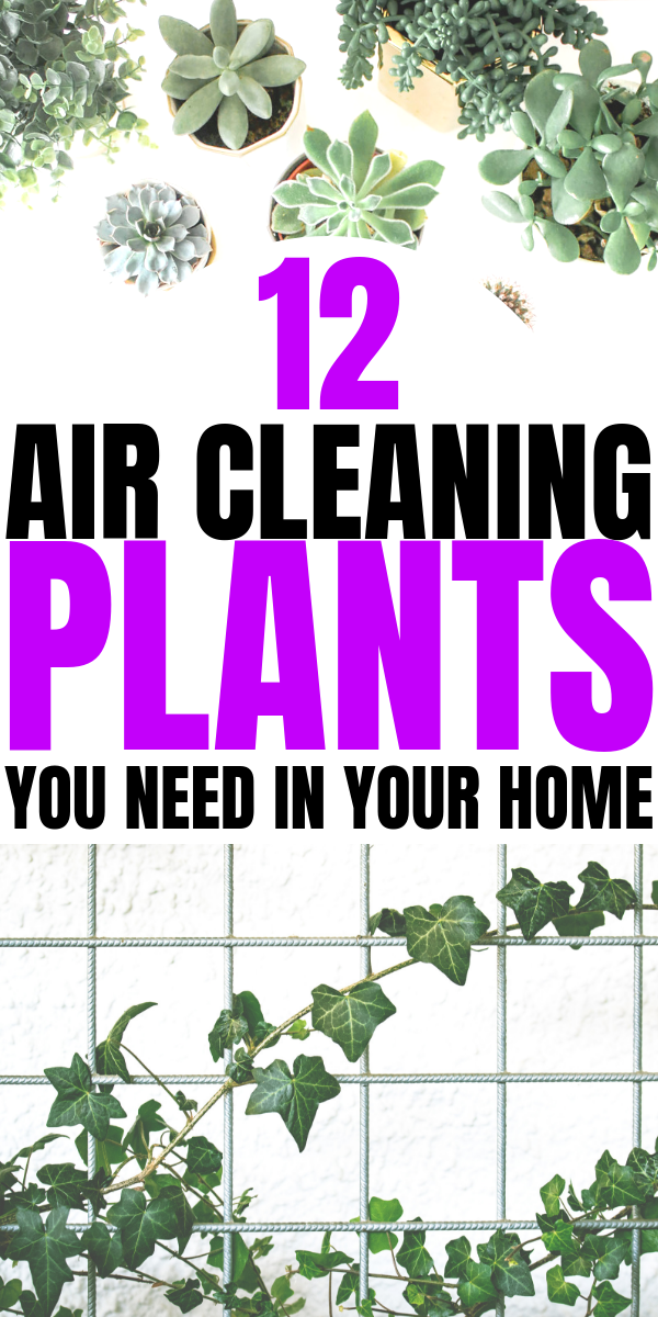12 Air Cleaning Plants You Need In Your Home | Interior design | Air purifying plants | home decor inspiration | Houseplants that clean the air | Via: https://themummyfront.com #themummyfront.com #houseplants #healthtips #healthyliving #plantcare