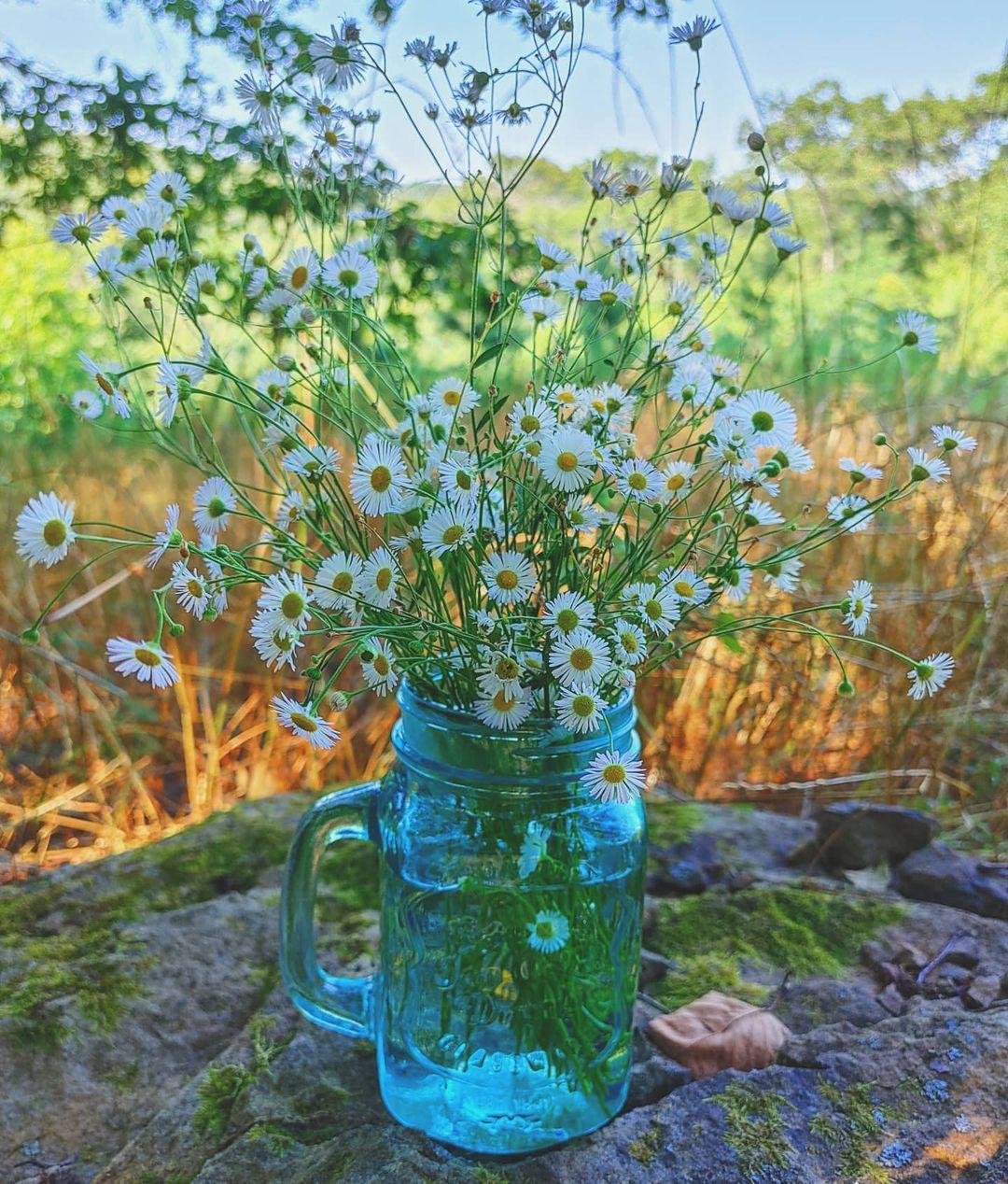 Daisy Bouquet in Mason Jar